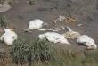 Cá, vịt chết hàng loạt ở khe Dốc Đỏ, Quảng Nam