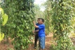 Những tấm gương sáng cựu binh làm kinh tế giỏi trên vùng đất Quảng Trị