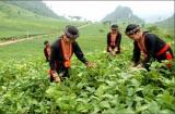 Một số giải pháp giảm nghèo đa chiều ở Việt Nam