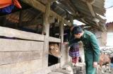 Hơn 2.600 con gia súc, gia cầm bị chết do rét đậm, rét hại