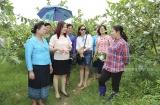 Hội LHPN Hà Nội: Hỗ trợ hội viên phát triển kinh tế thông qua vay vốn từ Quỹ quốc gia giải quyết việc làm
