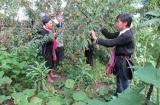 Phát triển kinh tế vùng thúc đẩy giảm nghèo ở Lai Châu