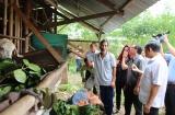 Đồng Nai: Hiệu quả từ mô hình nhân rộng nuôi dê tại Trảng Bom