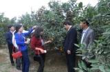 Hội Nông dân huyện Thanh Oai (Hà Nội):Tăng cường tiếp cận nguồn vốn vay giúp hội viên, nông dân thoát nghèo