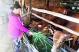 Ninh Thuận: Quản lý, tổ chức cho hơn 1100 dự án vay từ nguồn vốn giải quyết việc làm