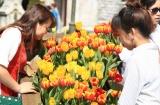 Lễ hội hoa tulip lớn nhất Việt Nam tại Sun World Ba Na Hills