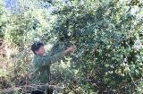 Huyện Bắc Yên (Sơn La): Triển khai nhiều mô hình giảm nghèo hiệu quả