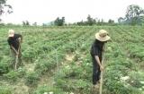 Lâm Đồng:  Nhìn lại kết quả giảm nghèo vùng đồng bào dân tộc thiểu số