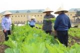 Trung tâm Điều dưỡng PHCN Tâm thần Việt Trì: Đảm bảo công tác môi trường, nâng cao chất lượng chăm sóc đối tượng