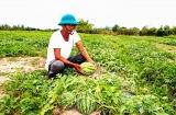 Nỗ lực giảm nghèo bền vững