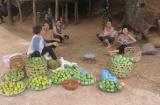 Huyện Yên Châu (Sơn La): Nỗ lực giảm nghèo nhanh và bền vững