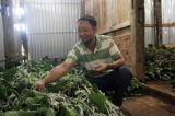 Dấu ấn 5 năm thực hiện giảm nghèo trên quê hương Bảo Lộc (Lâm Đồng)