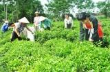 Thái Nguyên thực hiện tốt chính sách giảm nghèo