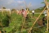 Hưng Yên: Đào tạo nghề cho lao động nông thôn gắn với xây dựng nông thôn mới