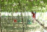 Năm 2017: Ninh Thuận đào tạo nghề cho lao động nông thôn vượt chỉ tiêu kế hoạch được giao