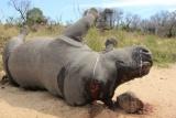 """Phim ngắn truyền thông: Cộng đồng mạng """"quay lưng"""" với  việc sử dụng sừng tê giác"""