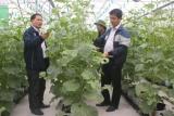 Nông dân Hà Nam đã trở thành nông dân 4.0 như thế nào?