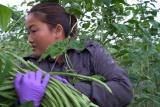 Chông chênh: Phim tài liệu về thân phận những cô dâu Việt ở xứ Đài