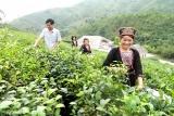 Xã Bằng Cốc (huyện Hàm Yên): Thay đổi nhận thức về giới trong đồng bào dân tộc thiểu số