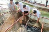 Điện Biên: Chú trọng công tác giảm nghèo, nâng cao đời sống người dân