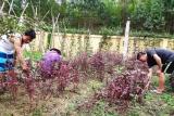 Phú Thọ: Còn nhiều khó khăn trong cai nghiện ma túy tại cộng đồng
