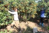 Quảng Ninh tích cực giải quyết việc làm cho người lao động