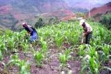Điểm sáng trong xóa đói giảm nghèo tại Yên Bái