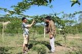 Xã Dồm Cang (Sơn La) nỗ lực giảm nghèo bền vững