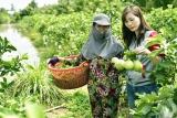 Để giảm nghèo vùng Tây Nam Bộ thực sự bền vững