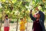 Ninh Thuận bảo đảm bình đẳng giới trong đời sống gia đình