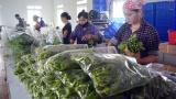 Lâm Thao có trên 7.200 lao động được đào tạo nghề