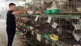 Thị xã Sơn Tây: Đào tạo nghề phù hợp với nông dân