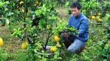 Nhiều mô hình đào tạo nghề cho lao động nông thôn hiệu quả ở Quảng Ninh