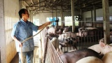 Hiệu quả đào tạo nghề cho lao động nông thôn ở Trực Ninh