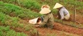 Huyện Lạc Dương: Kết quả đáng ghi nhận trong công tác bình đẳng giới