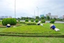 Giật mình với mức lương của công nhân cắt cỏ trên Đại lộ Thăng Long