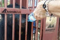Cứu hộ 2 cá thể gấu tại An Khê, Gia Lai