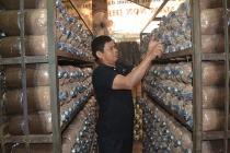 Trung tâm dạy nghề huyện Krông Ana: Đào tạo nghề gắn với giải quyết việc làm cho người lao động