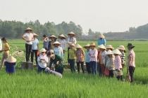 Huyện Thanh Thủy: Đào tạo nghề gắn với phát triển kinh tế - xã hội