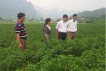 Lạng Sơn đẩy mạnh công tác giảm nghèo giai đoạn 2016 -2020
