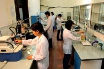 Phú Yên: Thúc đẩy vai trò của phụ nữ trong mọi lĩnh vực