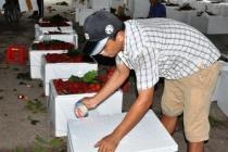 Bến Tre:  Chôm chôm nghịch mùa tăng giá, nhà vườn không có bán