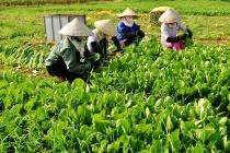 Quỹ Quốc gia giải quyết việc làm và các hoạt động hỗ trợ nữ lao động nghèo Hà Nội