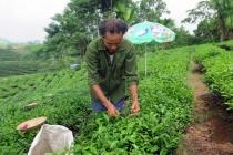 Năm 2017: Thái Nguyên phấn đấu giảm 2% hộ nghèo