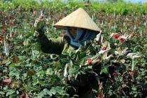 Giải quyết vốn vay tạo việc làm cho người dân vùng ven đô Hà Nội