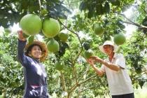 Những khó khăn và giải pháp về cho vay vốn giải quyết việc làm ở Hà Nội