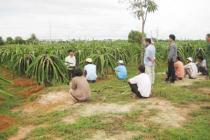 Nhìn lại hiệu quả công tác dạy nghề cho lao động nông thôn ở Bình Thuận