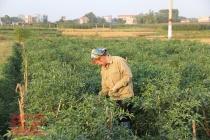 Bắc Giang: Thực hiện các dự án hỗ trợ phát triển sản xuất thuộc chương trình giảm nghèo