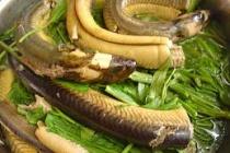 Thịt lươn tốt cho người viêm gan