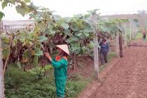 Phú Thọ hỗ trợ phụ nữ nghèo vươn lên phát triển kinh tế